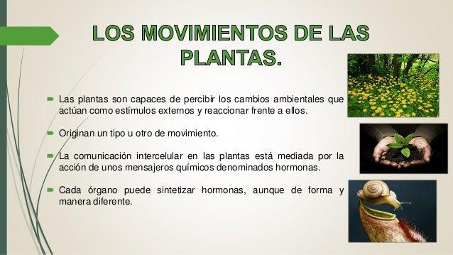 Regulaci n y coordinaccion en las plantas for Como se llaman las plantas ornamentales