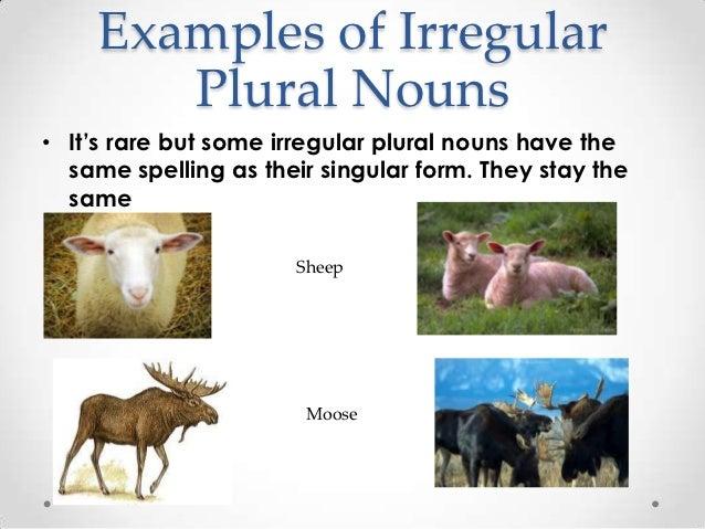Regular and Irregular plural nouns!