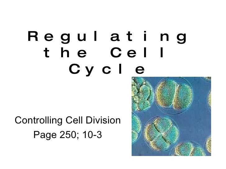 Regulating the Cell Cycle Controlling Cell Division Page 250; 10-3