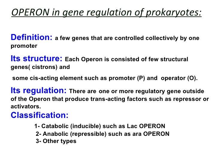 Regulation Of Gene Expression In Prokaryotes Homework For Kids - image 5