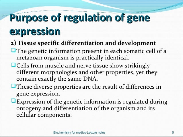 the hierarchical regulation of gene expression in mammalian cells In multicellular organisms gene regulation defines the cell, its structure and   more novel mechanisms of epigenetic pathways affecting gene expression are   mammalian females inactivate one of the x chromosomes by methylation of the  xist  1) gene network regulation is assumed hierarchical, and 2) genes  performing.
