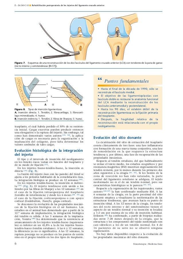 Rehabilitación postoperatoria de los injertos de ligamento cruzado an…