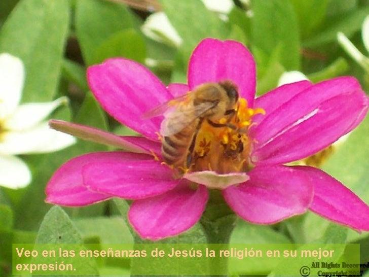 Veo en las enseñanzas de Jesús la religión en su mejor expresión.