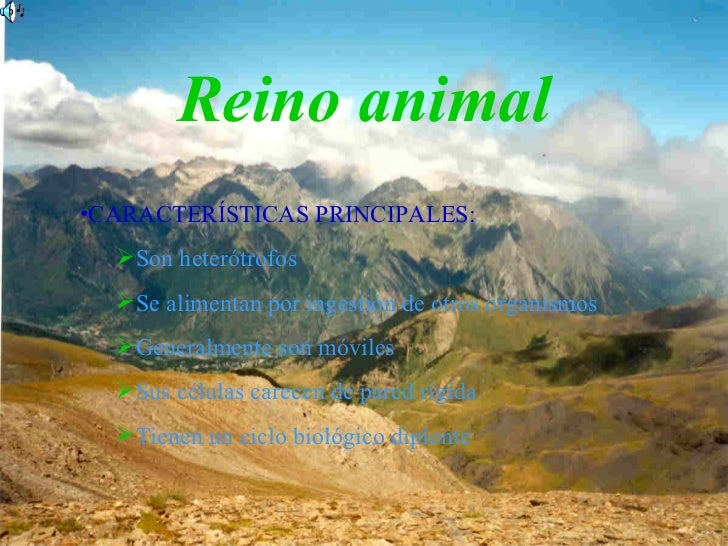 Reino animal <ul><ul><li>CARACTERÍSTICAS PRINCIPALES: </li></ul></ul><ul><ul><ul><li>Son heterótrofos </li></ul></ul></ul>...