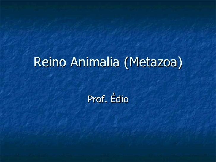 Reino Animalia (Metazoa) Prof. Édio