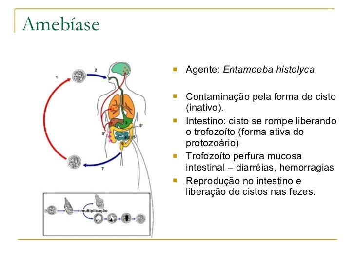 Amebíase <ul><li>Agente:  Entamoeba histolyca </li></ul><ul><li>Contaminação pela forma de cisto (inativo). </li></ul><ul>...