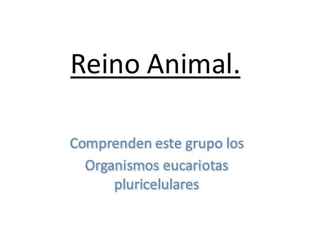 Reino Animal. Comprenden este grupo los Organismos eucariotas pluricelulares