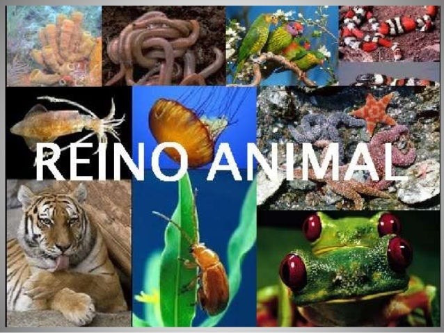 ZOOLOGIA  RAMO DA BIOLOGIA QUE ESTUDA OS ANIMAIS  Características Gerais:  • Eucariontes  • Pluricelulares  • Heterótrofos...