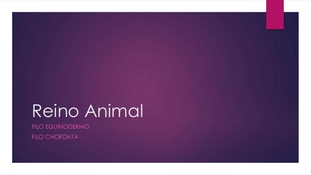 Reino Animal  FILO EQUINODERMO  FILO CHORDATA