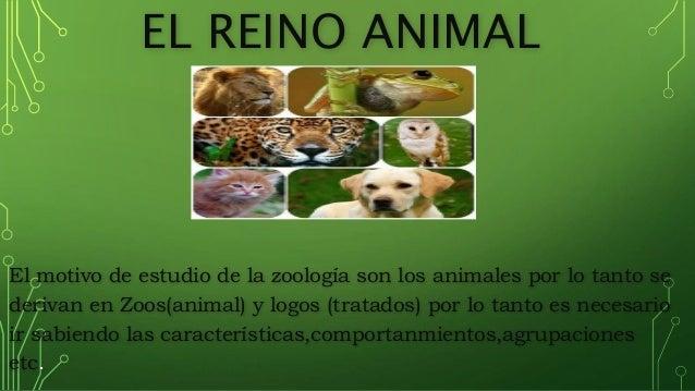 EL REINO ANIMAL El motivo de estudio de la zoolog�a son los animales por lo tanto se derivan en Zoos(animal) y logos (trat...