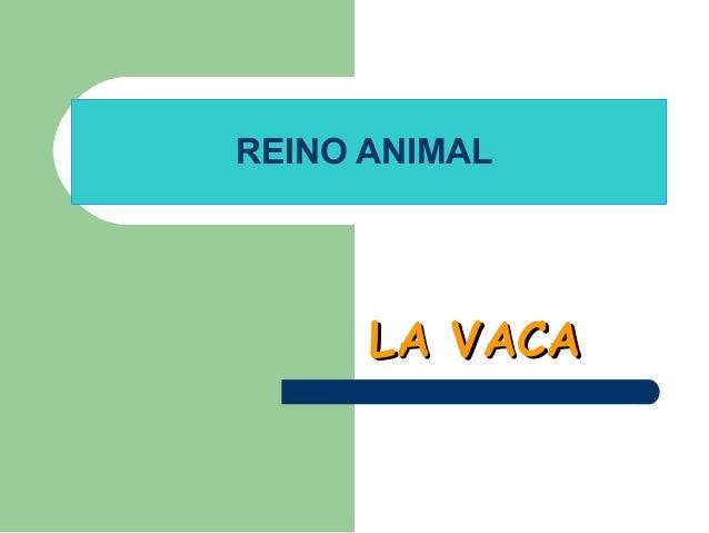 REINO ANIMAL  LA VACA