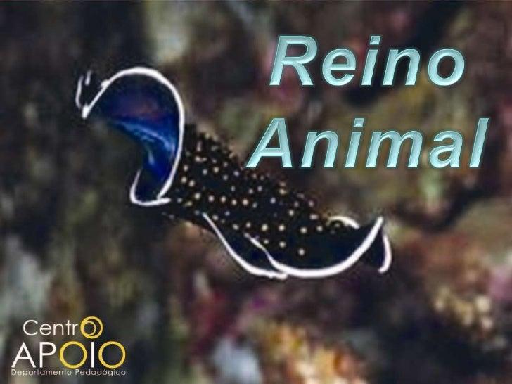 www.CentroApoio.com - Biologia - Reino Animal - Vídeo Aula