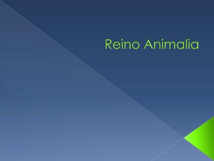  De um modo geral, os animais  apresentam um conjunto de  características que os distinguem: São eucariontes multicelula...