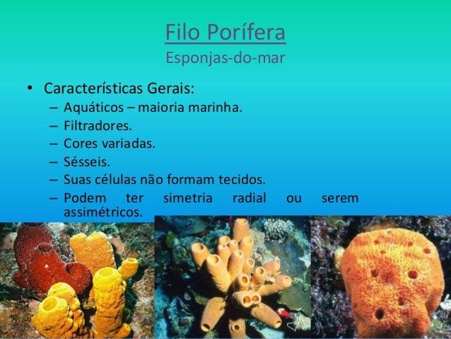 Filo Porífera Esponjas-do-mar • Características Gerais: – Aquáticos – maioria marinha. – Filtradores. – Cores variadas. – ...