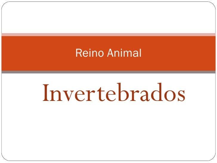 Invertebrados Reino Animal