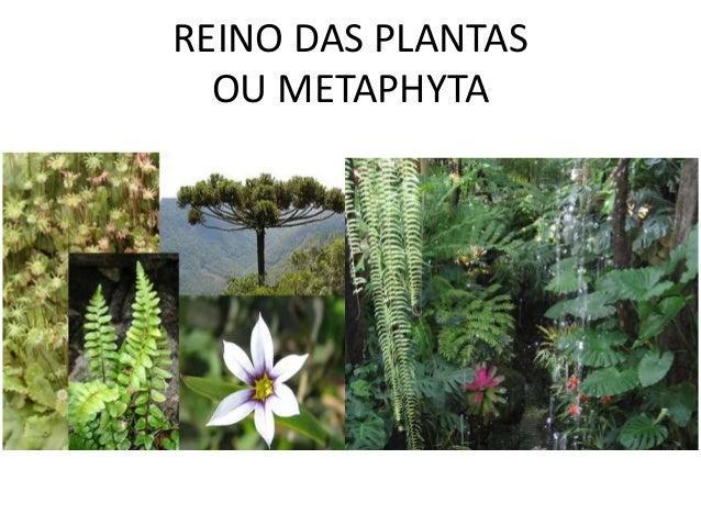REINO DAS PLANTAS  OU METAPHYTA