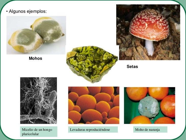 La medicina para el hongo