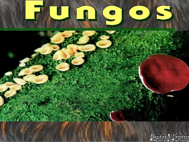 - Os fungos são seres eucariontes, que incorporam seus alimentos por absorção, ou seja, são heterótrofos por absorção. - S...