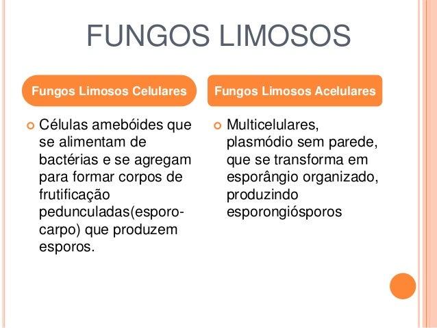 FUNGOS LIMOSOS  CELULARES  Dictyostelium discoideum