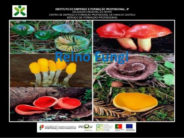 Reino Fungi INSTITUTO DO EMPREGO E FORMAÇÃO PROFISSIONAL, IP DELEGAÇÃO REGIONAL DO NORTE CENTRO DE EMPREGO E FORMAÇÃO PROF...
