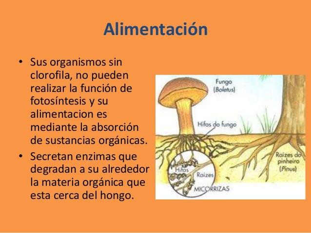 Enfermedades causadas por el moho - Tipos de hongos en la pared ...