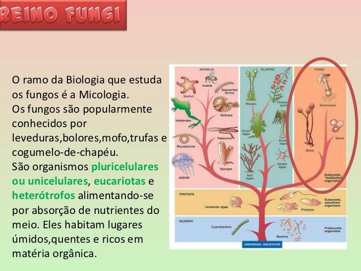 Fungos Slide 2