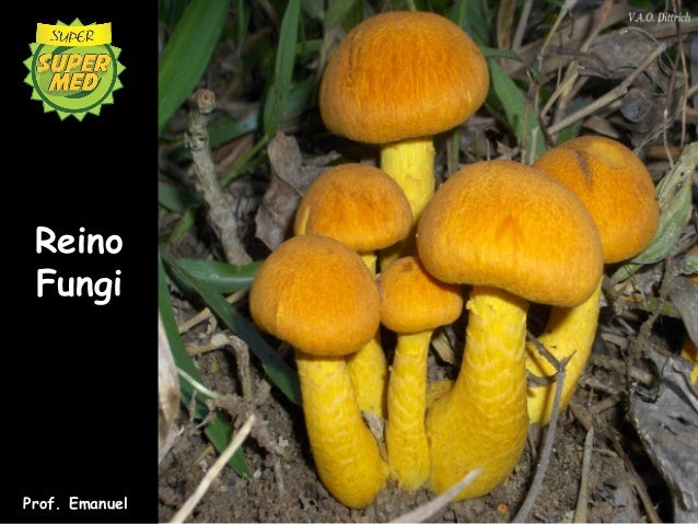 Reino FungiProf. Emanuel
