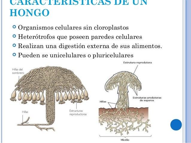 Reino fungi 2 - Tipos de hongos en la pared ...