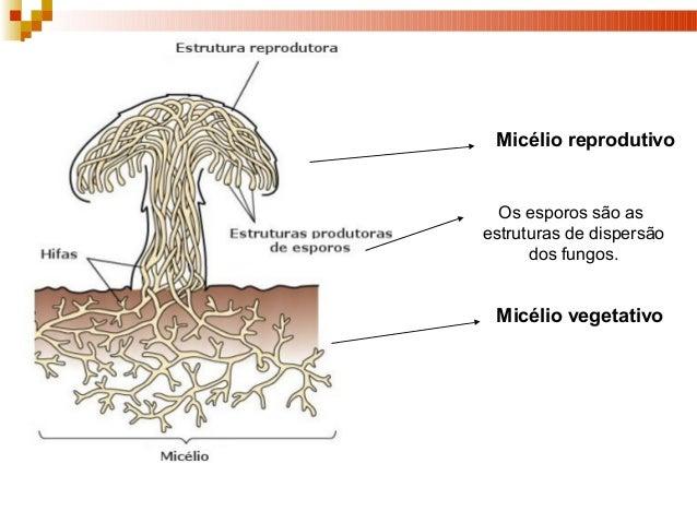 Linhas guias de tratamento de um fungo de pregos