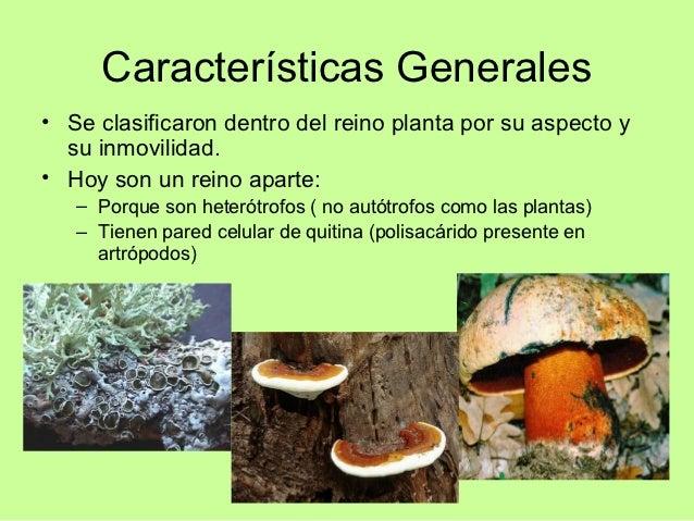 Reino fungi for Como se planta la lavanda