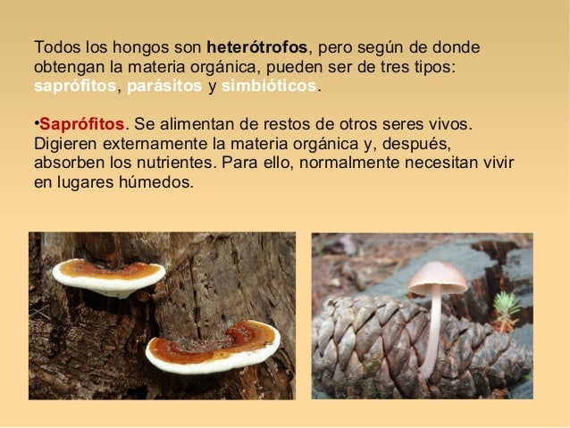 Los hongos de uña en las manos