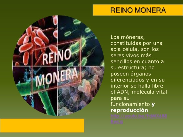 REINO MONERA<br />Los móneras, constituidas por una sola célula, son los seres vivos más sencillos en cuanto a su estructu...