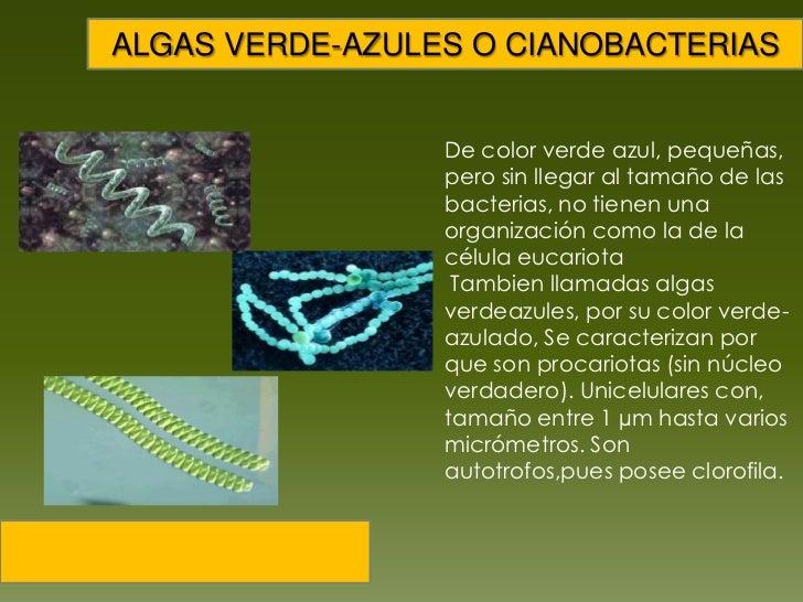 Resultado de imagen de Las cianobacterias son comunes actualmente en aquellos medios costeros en los que la elevada salinidad del agua u otras condiciones ambientales especialmente duras restringen la colonización por animales.