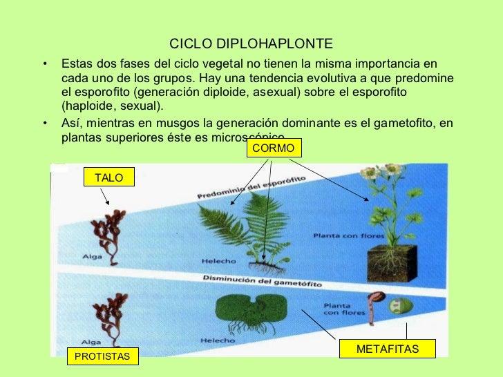 Traqueofitas reproduccion asexual de las plantas