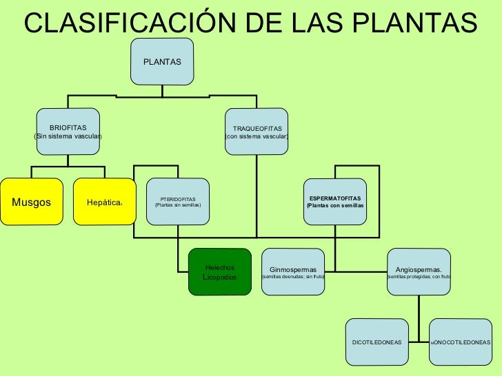 clasificación de las plantas plantas briofitas sin sistema vascular