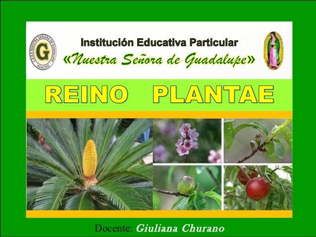 Reino Plantae 1