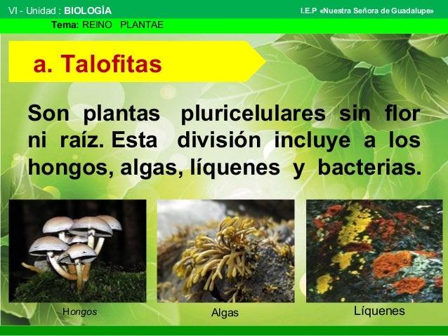 Reino plantae 1 for Que son plantas ornamentales ejemplos