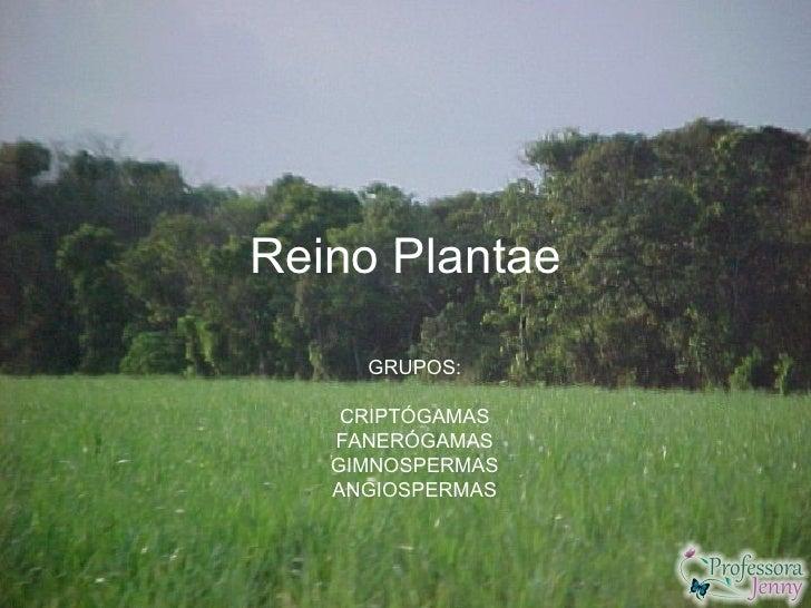Reino Plantae     GRUPOS:    CRIPTÓGAMAS   FANERÓGAMAS   GIMNOSPERMAS   ANGIOSPERMAS