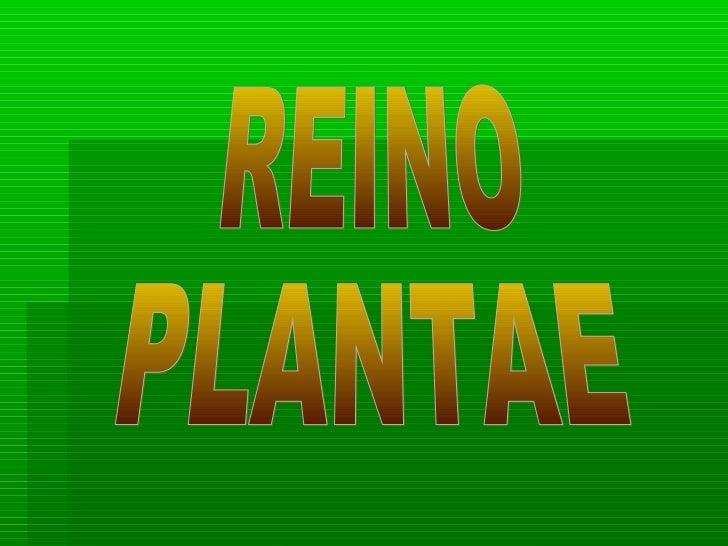 CARACTERISTICAS Las plantas son organismos  fotosintéticos multicelulares adaptados a  la vida terrestre. Las plantas mo...