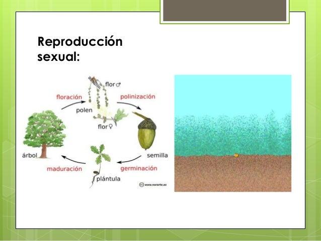Reino monera reproduccion asexual de las plantas