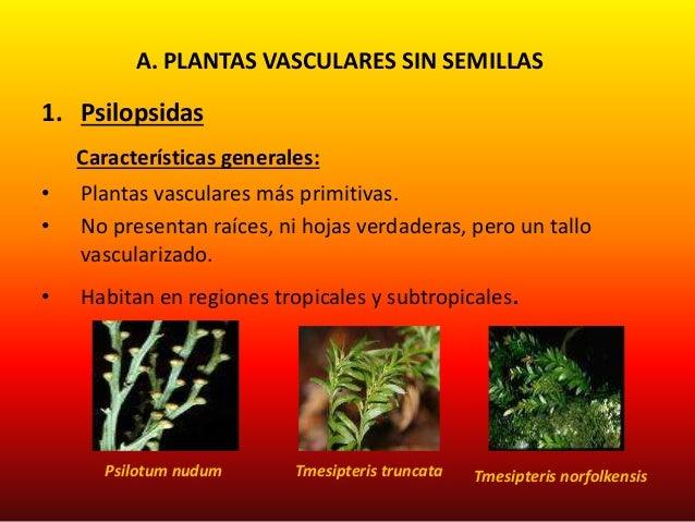 Reino plantae for Plantas sin semillas