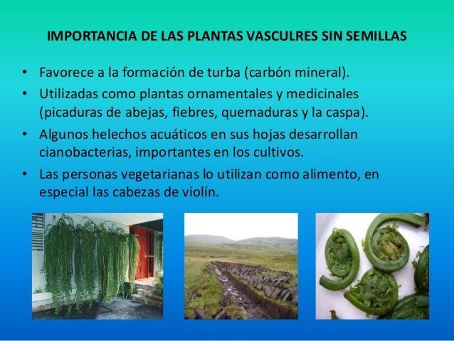 Reino plantae for Definicion de plantas ornamentales