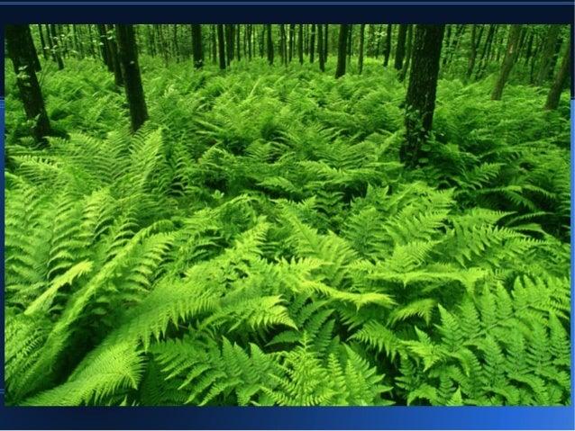 Reino Plantae 62577981 on Downloads 2