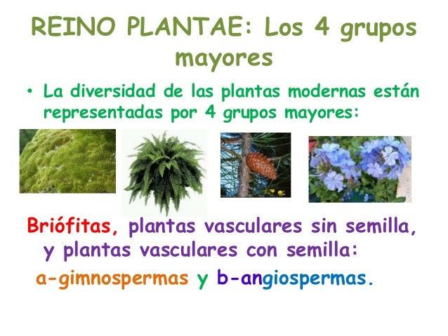 Reino plantae, 4 grupos mayores