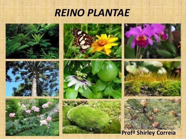 REINO PLANTAE  Profª Shirley Correia