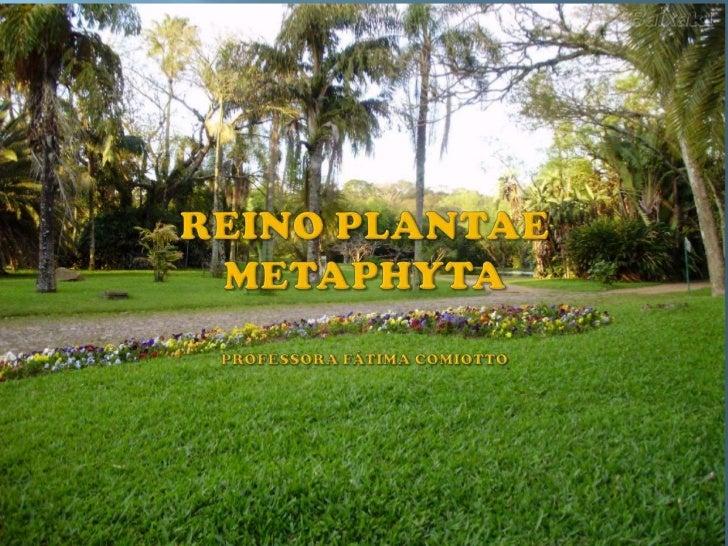 REINO PLANTAE  METAPHYTAPROFESSORA FÁTIMA COMIOTTO<br />