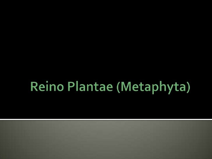Reino Plantae (Metaphyta)<br />