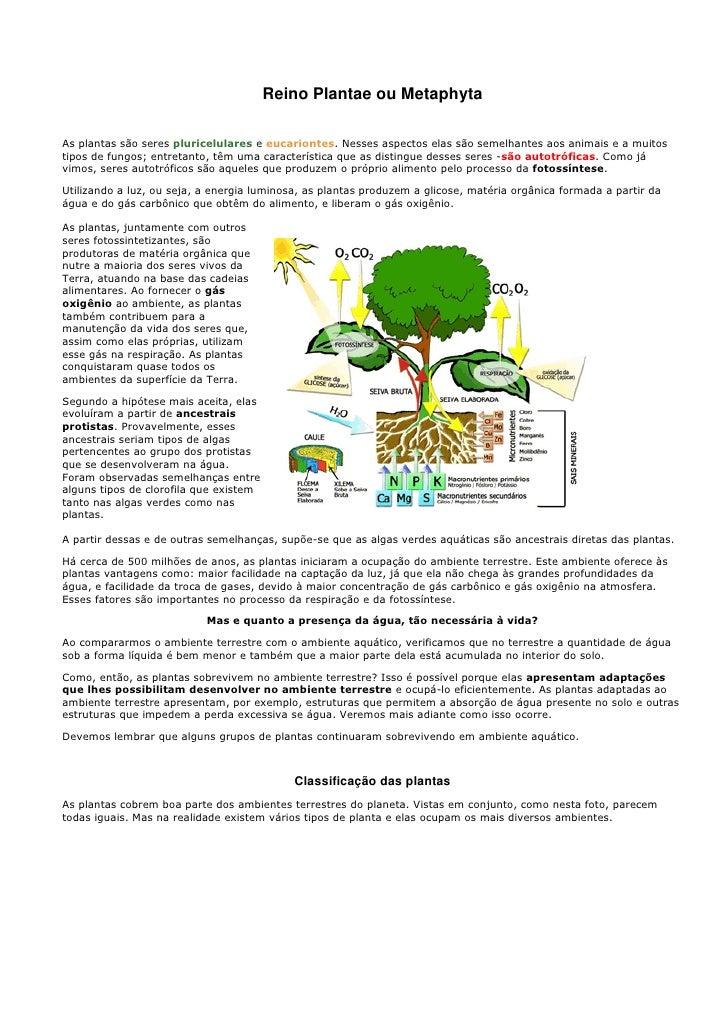 Reino Plantae ou MetaphytaAs plantas são seres pluricelulares e eucariontes. Nesses aspectos elas são semelhantes aos anim...