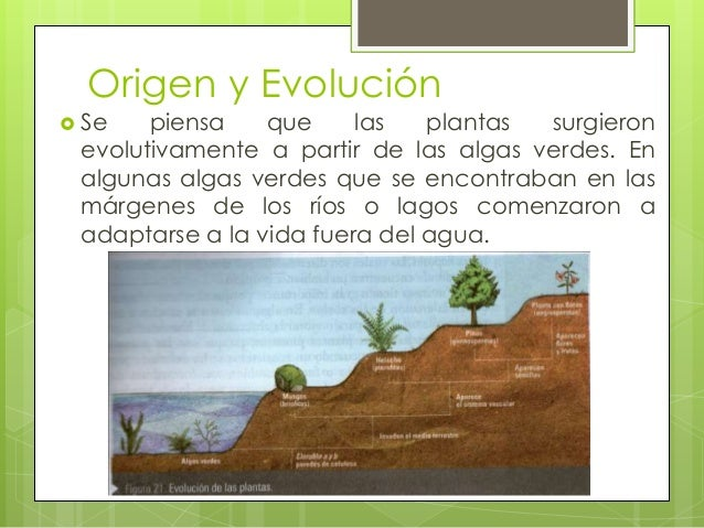 Reino Plantae Plantas