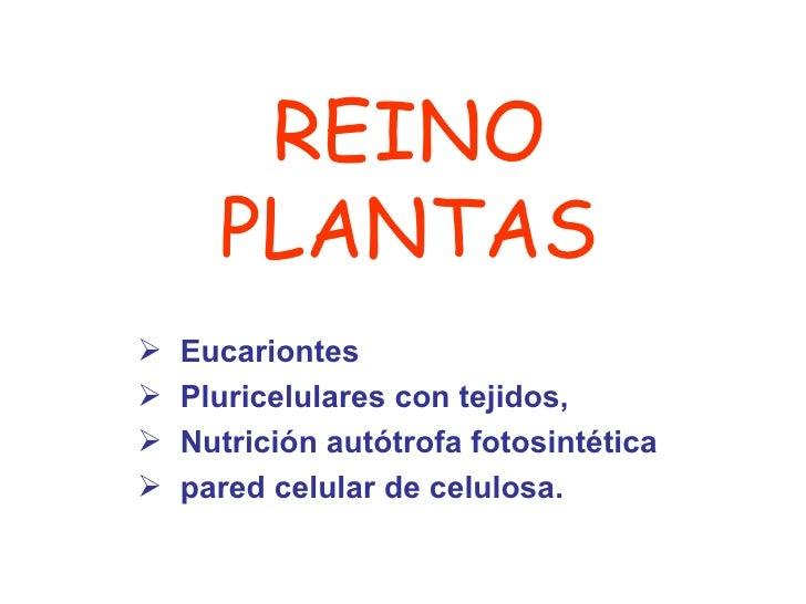 REINO PLANTAS <ul><li>Eucariontes </li></ul><ul><li>Pluricelulares con tejidos,  </li></ul><ul><li>Nutrición autótrofa fot...